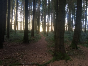 A wonderful place to run. Got to keep on eye out for all the tree roots though