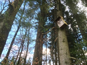 There's a few of these bird houses scattered through this forest